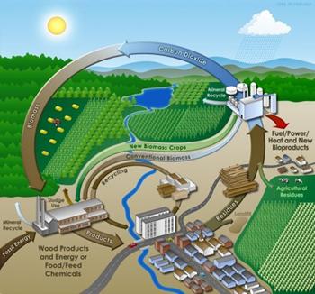 VIASPACE Green Energy Inc. - Biomass Solutions