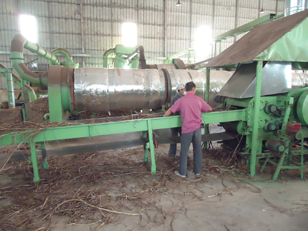 Dried Giant King Grass being fed into cutters